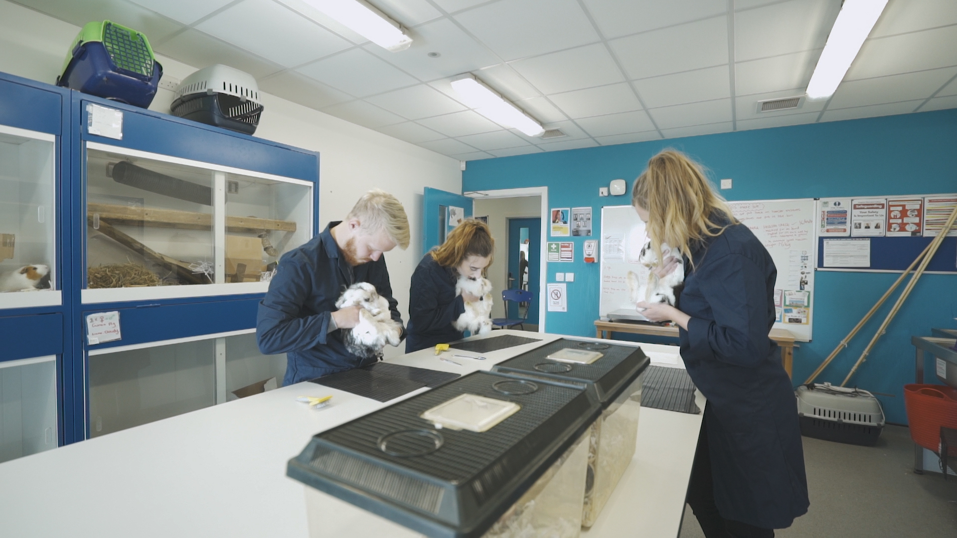 Three students in lab coats, performing a rabbit health check in one of the labs on the Kingston Maurward Estate.