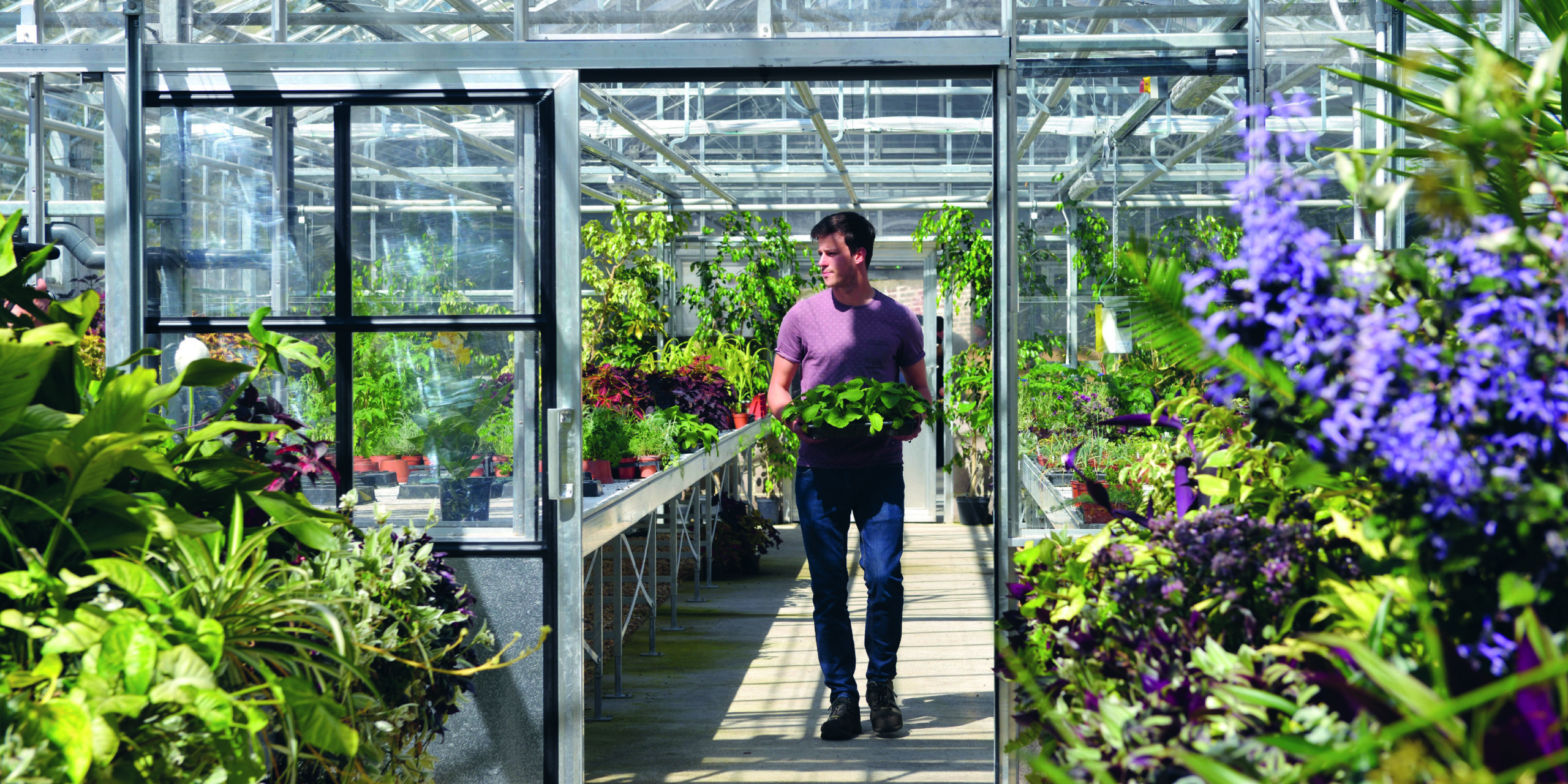 Horticulture student carrying a plant walking through Glasshouse on Kingston Maurward Estate