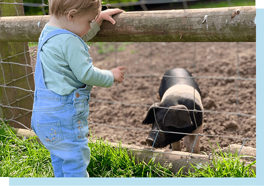 Young child in blue dungarees and green top looking at a pig