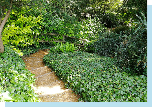 Stairs bordered with greenery which leads down to The Japanese Garden
